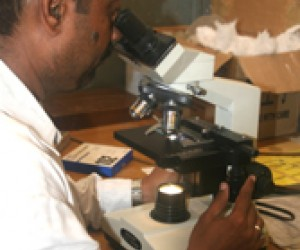 A lab technician examines samples for suspected TB in Karachi.