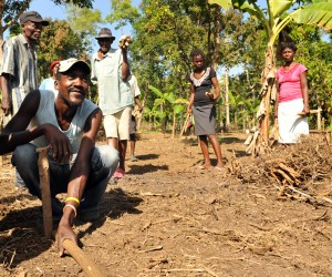 Farmers prepare the ground for cocoa seedlings in Acul du Nord, one of the communes in northern Haiti receiving assistance under