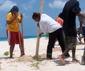 Codrington residents dig holes and plant fencing posts to help fortify breaches in their lagoon