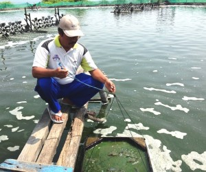 USAID helps aquaculture farmers adopt sustainable production practices and fisheries management.