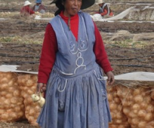 Local producers tend to crops of organic sweet onions, which flourish on once-barren land in the Bolivian Andes region of Oruro