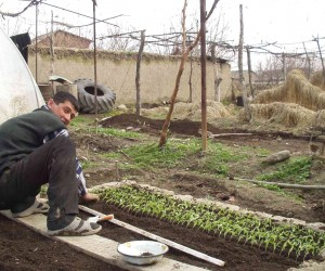 A farmer participating in a USAID-funded agricultural development project plants tomato seedlings for the next season.