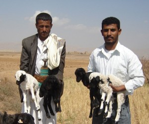 Lambs Bring Hope for More Income
