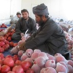 Workers sorting pomegranates for export in Kandahar Province.