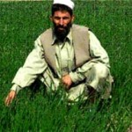 """I did not have peace of mind farming poppies,"" says Almas-ullah."
