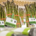 Kosovo growers sell their hand-picked asparagus under the brand name Viridis. It's Latin for fresh, young and green.