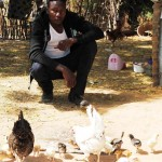 Harouna Kobor, chicken entrepreneur, wants to expand his business to sheep.