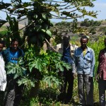 USAID beneficiaries stand in front of a mango tree and sugarcane plants.