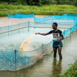 USAID's aquaculture project teaches beneficiaries to construct and stock fish ponds in Tonkolili.