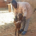 Oumar Guindo treats a goat at Doundé village, Mopti region.