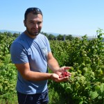 In Kosovo Farming is a bountiful business