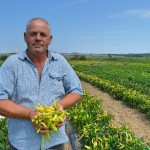 Turning New Chili Pepper Crop Into Commercial Business