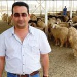 USAID helped Ahmad Alsaabari establish a demonstration feedlot to raise sheep and teach farmers new feeding, monitoring and mark