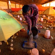 Today USAID loan-guarantee recipient Abebaw Gessese produces over 5 million eggs a year and enough chicken meat to feed 108,000