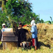 Farmers in Aklan province will be able to generate additional income by selling their rice husks to Asea One.