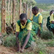 Students plant trees in Central Kenya.