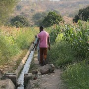 Njolo irrigation scheme in Dedza district, Malawi