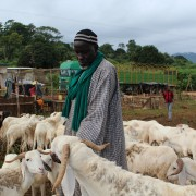 A seller and his livestock in Man during the campaign
