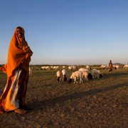 A family watches over their sheep at sunset. Near Jijiga, Somali Region, Ethiopia.