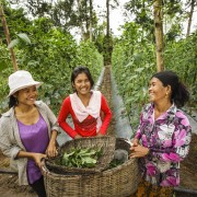 USAID Supporting Women's Livelihood Bond to Benefit 385,000 Women in Southeast Asia