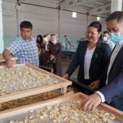 The new equipment is expected to almost triple the production capacity of the facility from 30 to 80 tons of dried garlic per season.