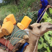 A Somali woman prepares to take her milk to market by camel.