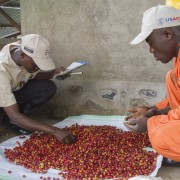Cleaning coffee cherries at a washing station in South Kivu, DRC.