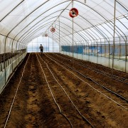 In 1800 m2 of greenhouses the women plan to grow cucumbers and tomatoes to sell during the off-season.