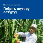 Cover of a manual in Kyrgyz language on growing hybrid corn.