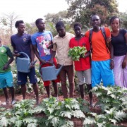 Young people in Fanda village in Niagis, Ziguinchor region, set up a farm for market gardening activities.