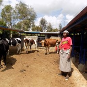 Elizabeth Wangui stands next to her cows in her newly built animal shelter.