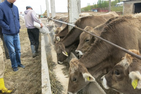 Cows that were producing 9 liters of milk are now producing up to 17 liters