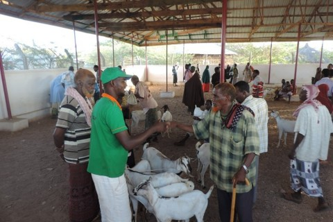 Somali men shake hands at a rehabilitated livestock market in Luuq.