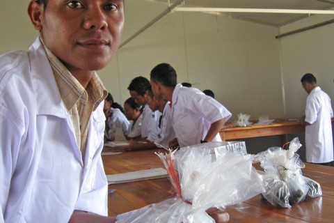 Gregorio Colo from Oecusse District learns practical skills through USAID's new agribusiness curriculum.