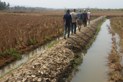 In Boffa, USAID's ILADP helps rehabilitate the dike protection system to increase rice production.