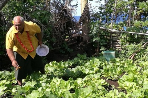 Kitchen Gardens Flourish in Samoa