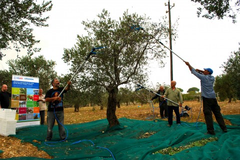 Olive growers from Dar Bechtar Cooperative in Koura, north Lebanon, train to use new mechanical harvesters.