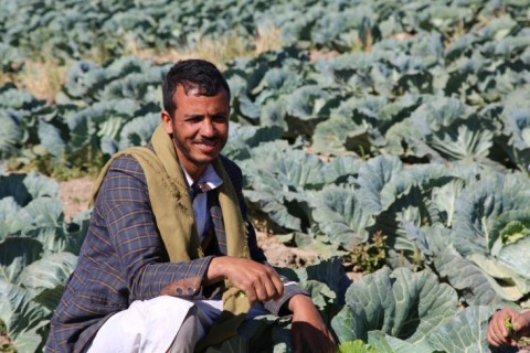Ahmed Ali Al-Qubatir is his cabbage field in Dhamar, Yemen