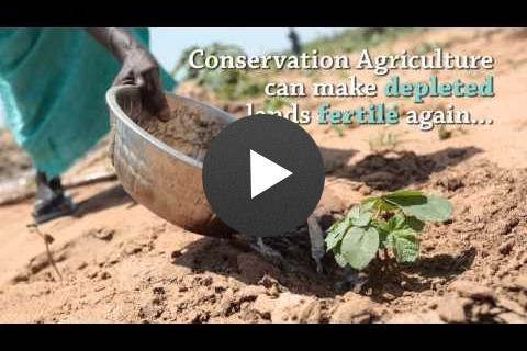 Yaajeende Conservation Agriculture