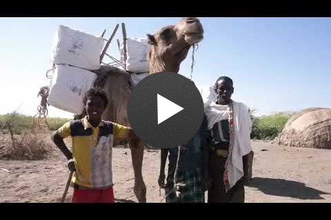 USAID in Ethiopia: Camels Fight Malaria