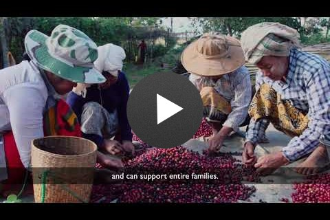 USAID helps Myanmar coffee growers and processors