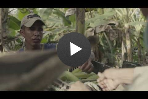 Linking Colombia's smallholder farmers to markets