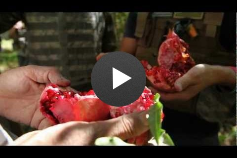 Farmer to Farmer: Arghandab Pomegranates