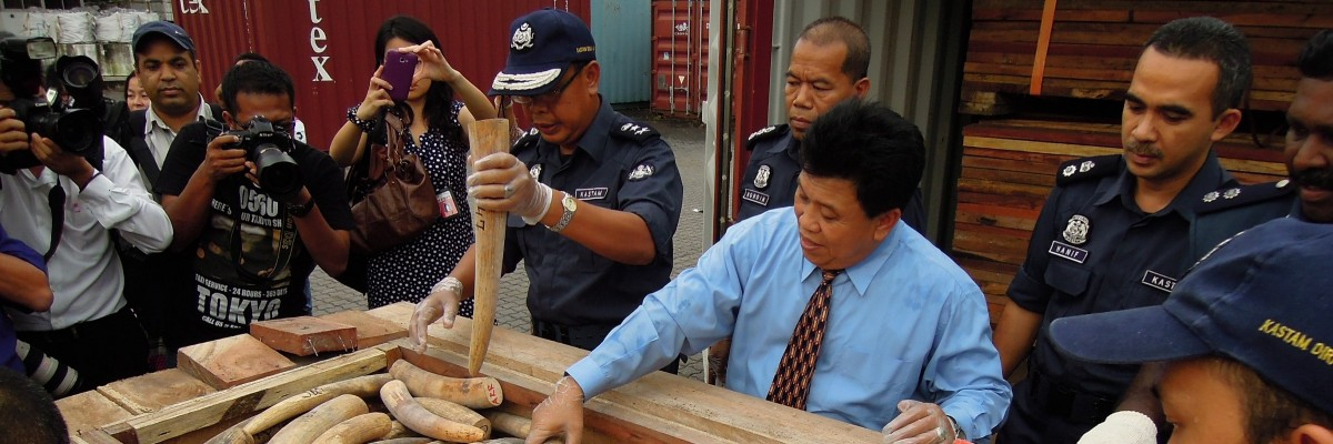 Ivory tusks seized at a port in Asia. Photo Credit: TRAFFIC