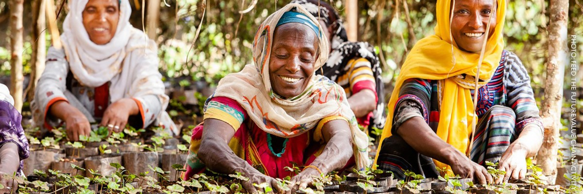 Image of Ethiopian women cultivating coffee seedlings