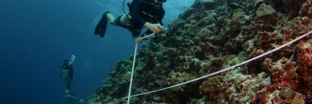 A diver measures and monitors coral reefs in Maldives