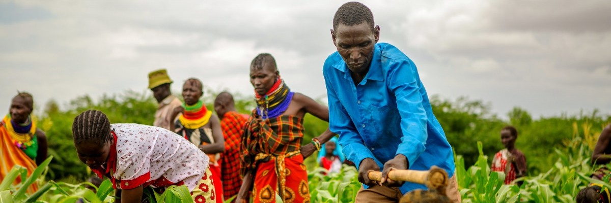 Residents of Moruese Village farming under the Moruese Irrigation Scheme which has improved food security in Moruese village, Turkana