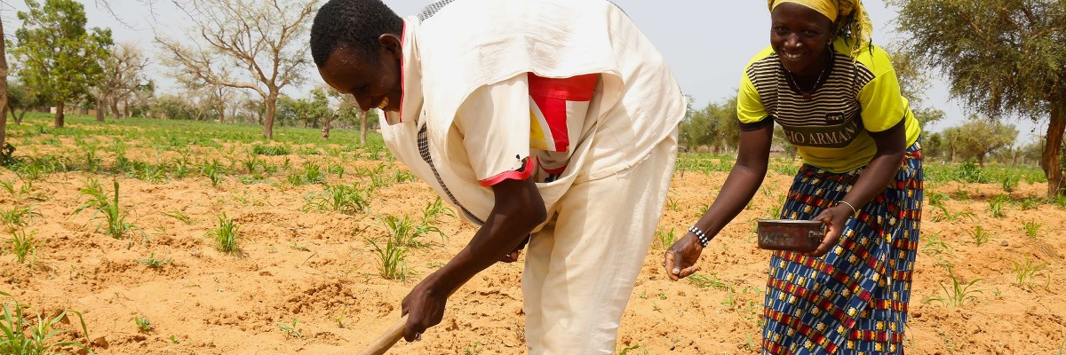 Thanks to USAID's support, farmers in the Mopti Region apply micro dosing technology enabling them to double their millet and sorghum production