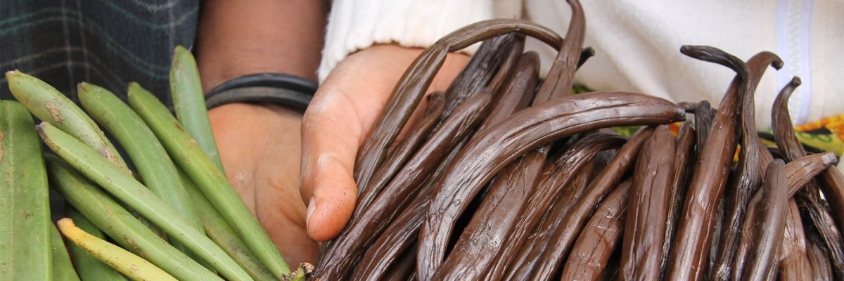 Search for a Better Life in Madagascar's Vanilla Fields