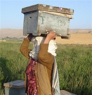 A trainee carries the beehive she received with at the end of the training.
